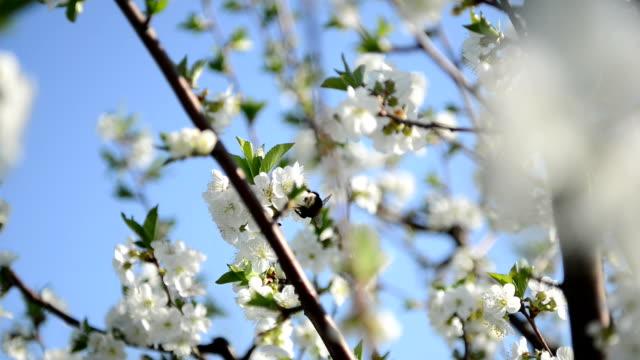 Frühling Blumen und Bienen