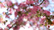 Spring flowers tree