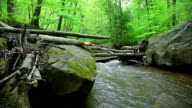 Spring flowing in forest ravine. Nature background