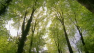 Spring forest, sun shining through trees,