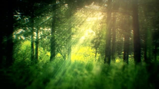 Sfondo astratto primavera (loop)