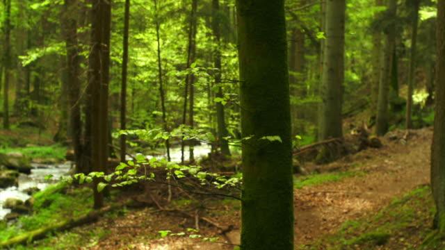 HD Torrente Foresta di primavera con Dolly Shot (4:2: 2 a 100 Mb/s)