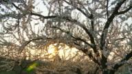 HD: Spring Fruit Trees