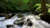 Spring in Great Smoky Mountains National Park