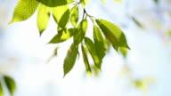 Frühling-Blätter