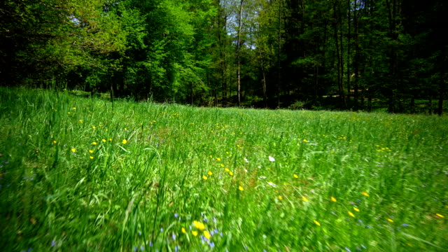 GIMBAL Spring Meadow At Forest Edge Flyover (4K/UHD to HD)