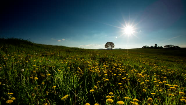 CRANE UP: Spring Meadow
