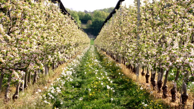HD DOLLY: Frühling Orchard