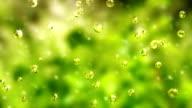 Spring rain (loopable)