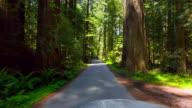 Spring Redwood Forest