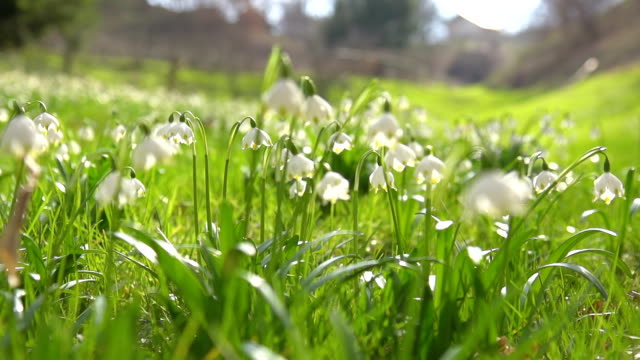 HD SUPER SLOW-MO: Spring Snowflakes In Meadow