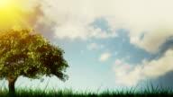 Spring/Summer tree