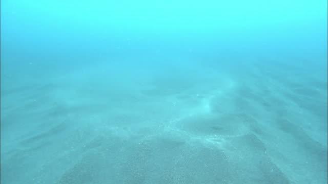 Spring water at the sea bottom of Rishiri Island in Hokkaido