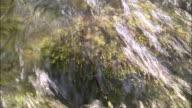 Spring water bubbles over mossy rocks, Yurihonjo, Akita