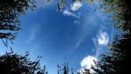 HD DOLLY: Spring Weizen gegen den blauen Himmel