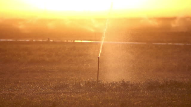Sprinkler at Sunset