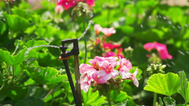 Sprinkler Flowers (Super Slow Motion)