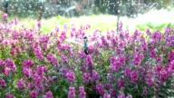 Sprinkler water in flowers garden, slow motion shot