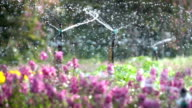 Sprinkler water in flowers garden, slow motion shot