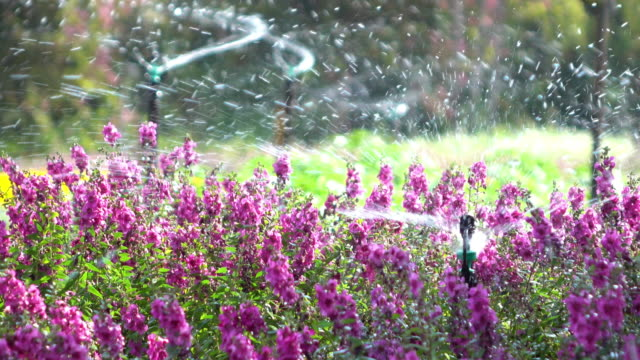 Sprinkler water in flowers garden
