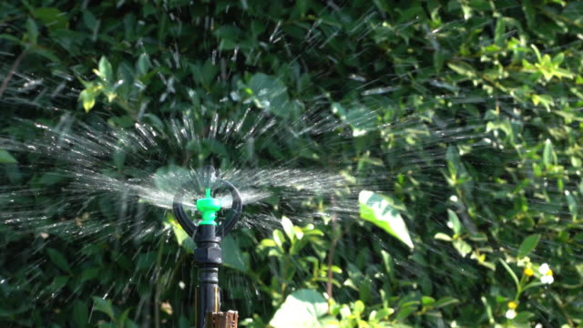 Sprinkler water in garden, 4k