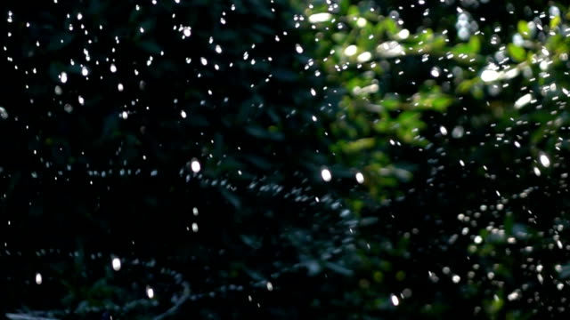 Sprinkler water, slow motion shot