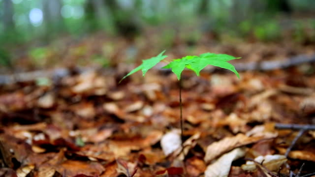 Sprout im Wald