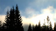 HD TIME-LAPSE: Spruce forest