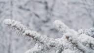 HD-ZEITLUPE: Fichte Zweig im Schnee