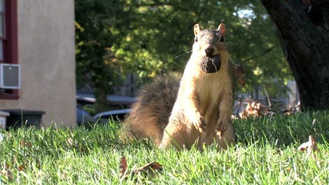 Squirrel 9-5: HD 1080/30f