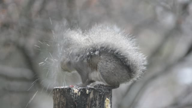 Squirrel eating in a rainstorm