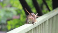 Squirrel on the fence.