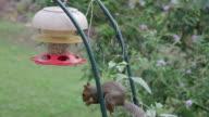 Squirrel Stealing Bird's Food