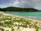 St. John: Morning glories on the sand at Lameshur Bay Beach