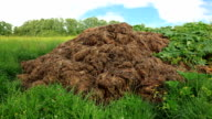 HD - Stable Manure