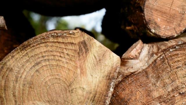 Stack of cut Pine logs