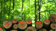 HD Stack of Wood in Spring Forest Dolly Shot (4:2:2)