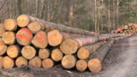 MS Stack of woods in forest / Orscholz, Saarland, Germany