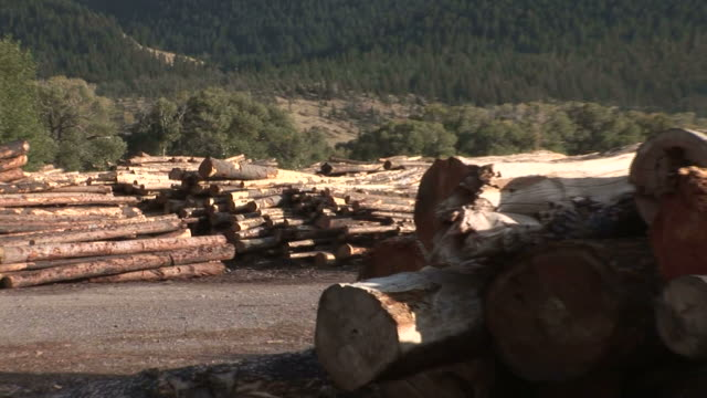 ZO Stacked cut tree trunks and trees mountains behind at the RY Timber Company / Ennis Montana United States