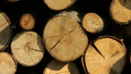 CU, ZO, Stacked firewood