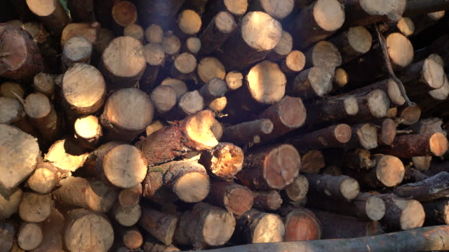 DS Stacked wood logs