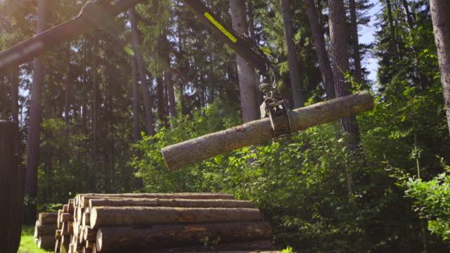Ammucchiare del legno