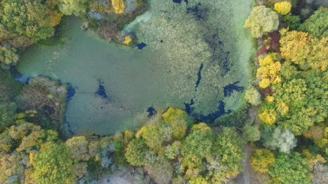 AERIAL: Stagnant water in pond in wildlife on sunny day