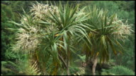 HD: Standing Proud: Cabbage Palm Tree, Plant, Flora.