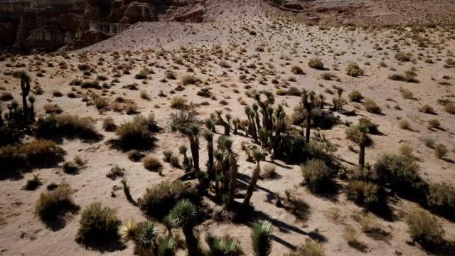 Stands van Joshua bomen gezien door Drone