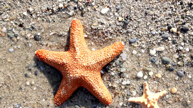 Starfish blown away by the waves