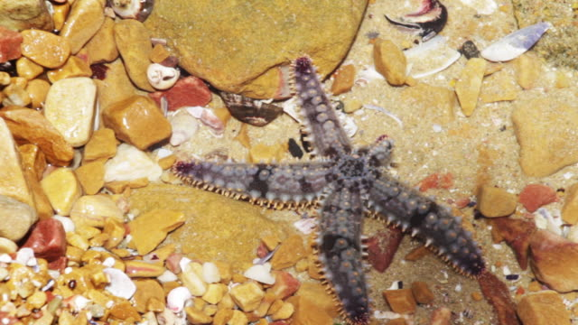 Starfish, close up