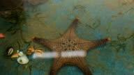starfish in aquarium