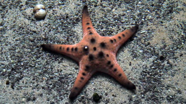 Starfish in the pond.