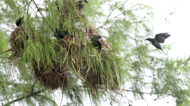 Starling lands on nest, high speed